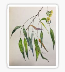 Gum leaves - Botanical illustration Sticker