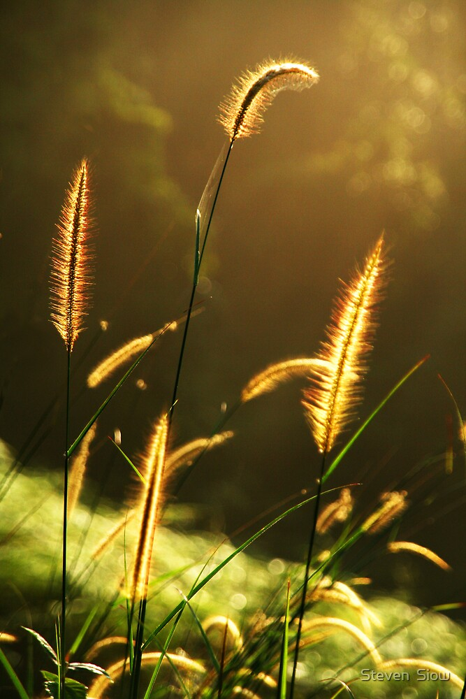 The Golden Plant by Steven  Siow