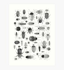 Ink Beetles Art Print
