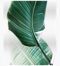 Banana leaves,Tropical leaves, Green leaves, Leaf, Modern art, Wall art, Print, Minimalistic, Modern, Scandinavian print Poster