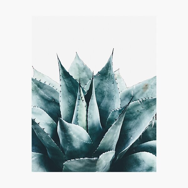 Plant print, Cactus print, Succulent, Scandinavian print, Trendy print, Styled, Pillow, Modern art, Wall art, Print, Minimalistic, Modern Photographic Print