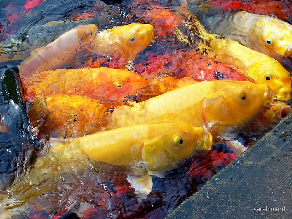 Here Fishy by sarah ward