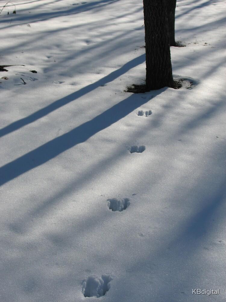 Tracks in the snow by KBdigital