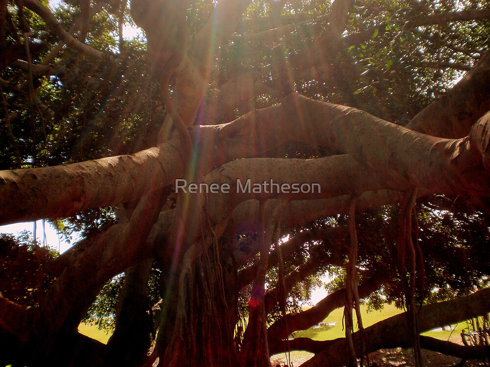 rainbow tree by Renee Matheson