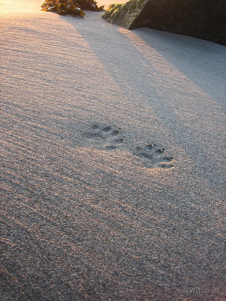Minktracks by Al Williscroft