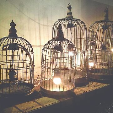 Light Bird Cages by sandyeates