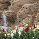Spring In The Desert by phil decocco