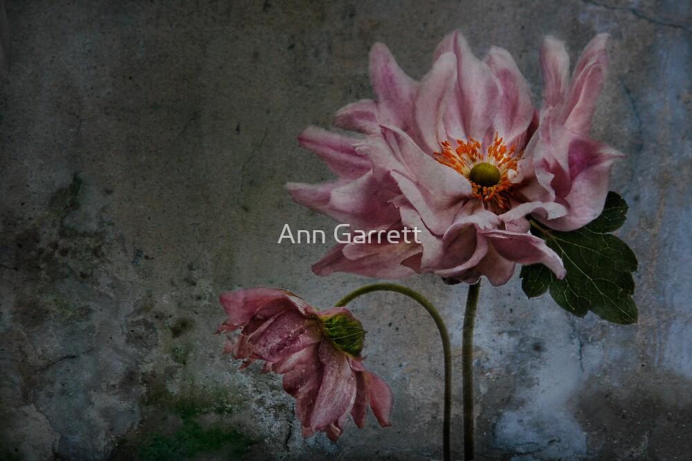 Anemone Grunge by Ann Garrett