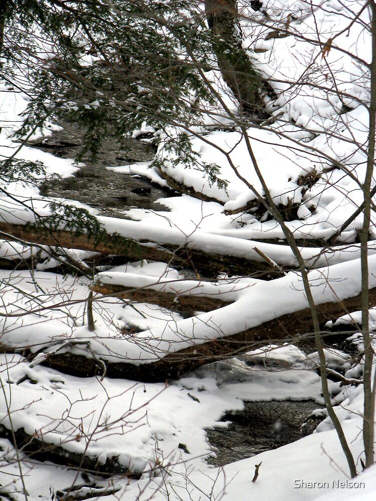 Galeton Stream by Sharon Nelson