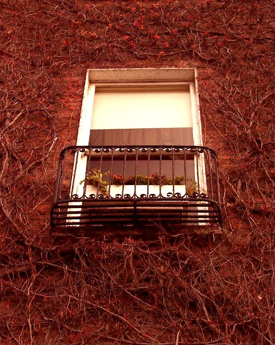 ivy window ... by SNAPPYDAVE