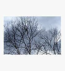 Reach for the sky! Photographic Print
