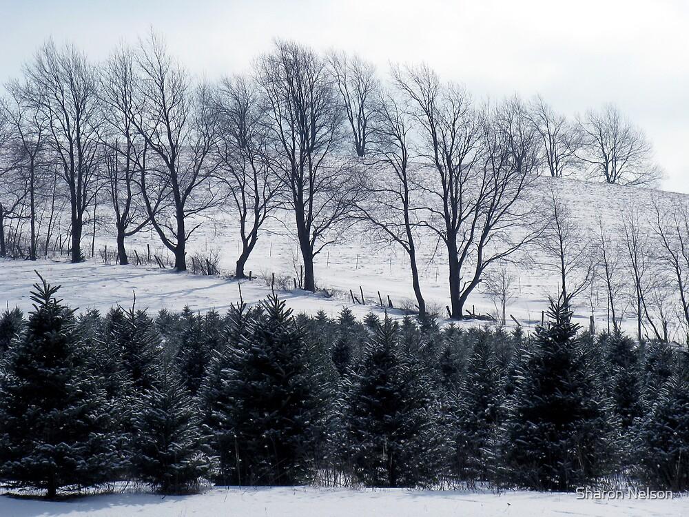 Winter Landscape #3 by Sharon Nelson