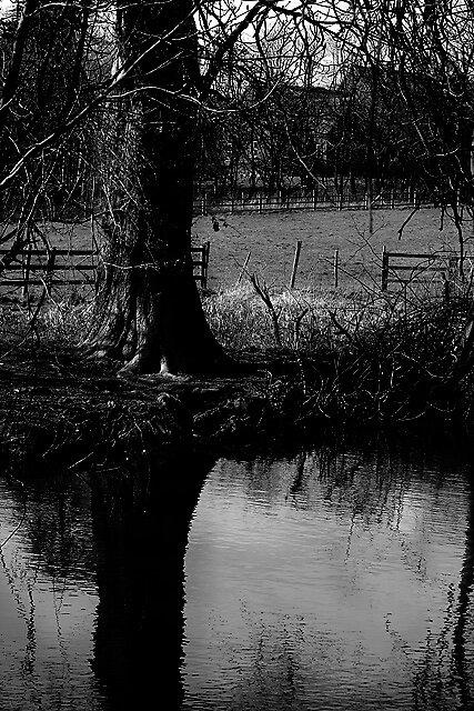 Tree reflection by Hanae