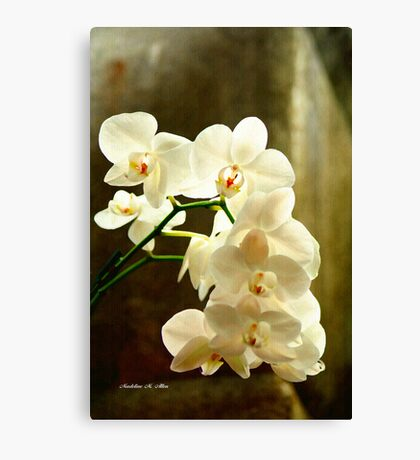 ORCHIDS ON CANVAS Canvas Print
