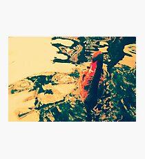 Swimming Black Swan Beauty Photographic Print