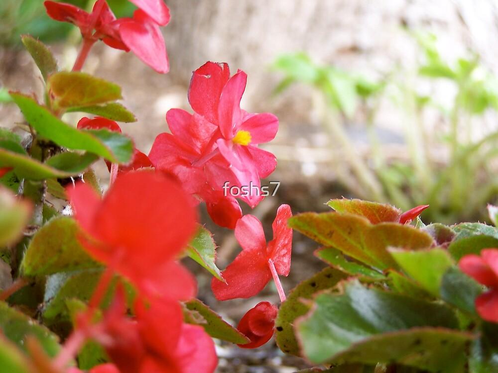 red flower by foshs7