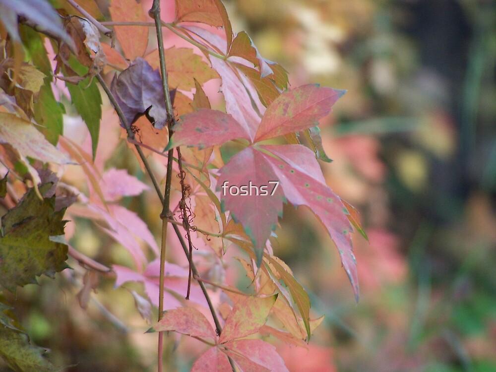 fall vine by foshs7