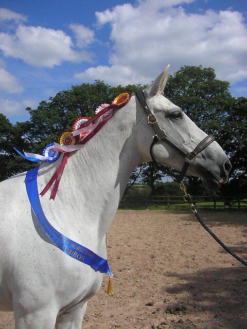 Grey Horse by samART