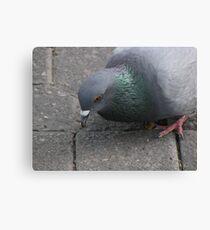 Pigeon* Canvas Print