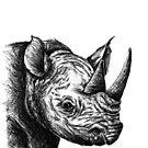Rhino-Skizze von sandyeates