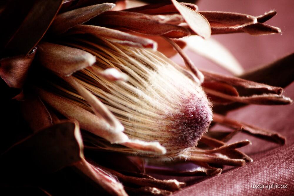 Sun dried flower by wzgraphicoz