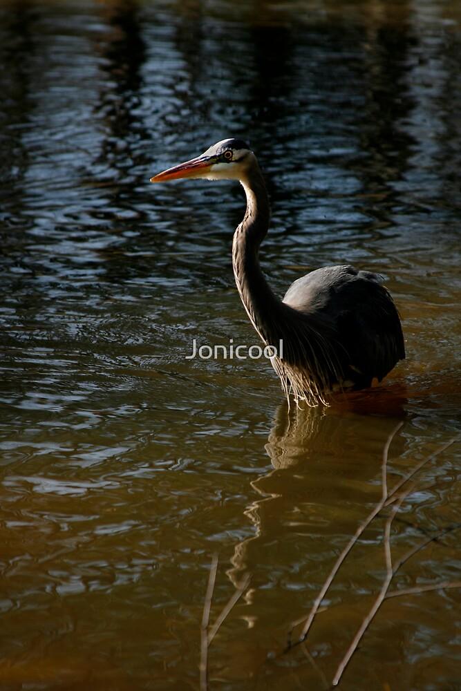 Park Heron by Jonicool