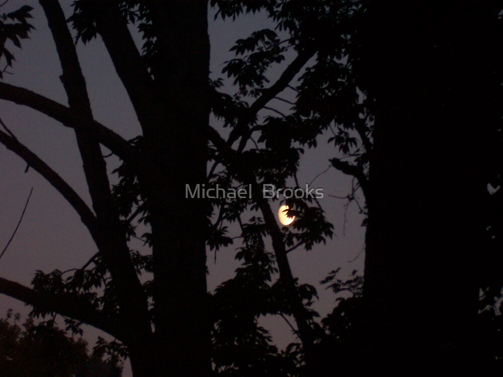 Moon through the Trees by Michael  Brooks