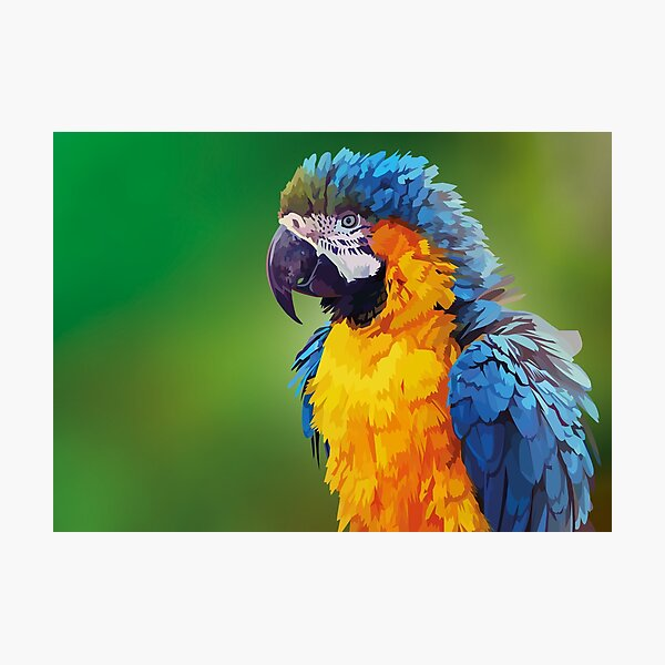 Parry the parrot Photographic Print