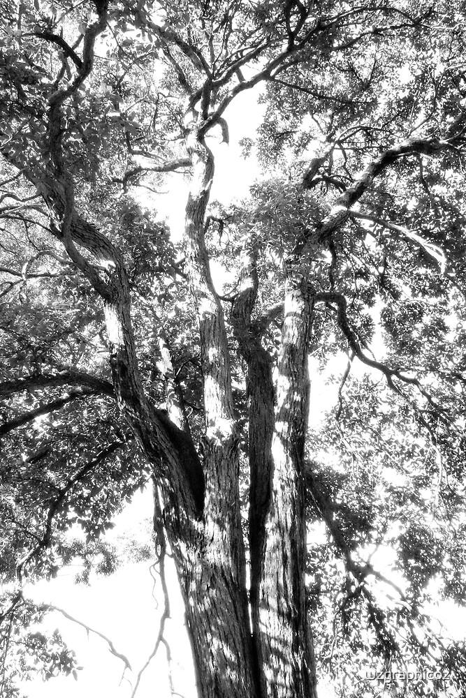 tree sketch by wzgraphicoz