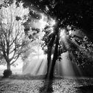 Light by Tracy Friesen