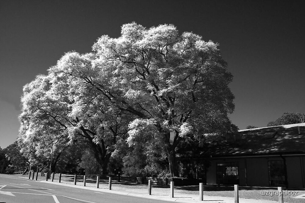 Parramatta park by wzgraphicoz