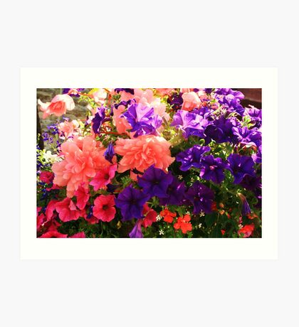 Hanging Basket Art Print