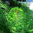 Sunlit Ferns by Shulie1