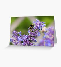 Bumble Bee collecting pollen Greeting Card