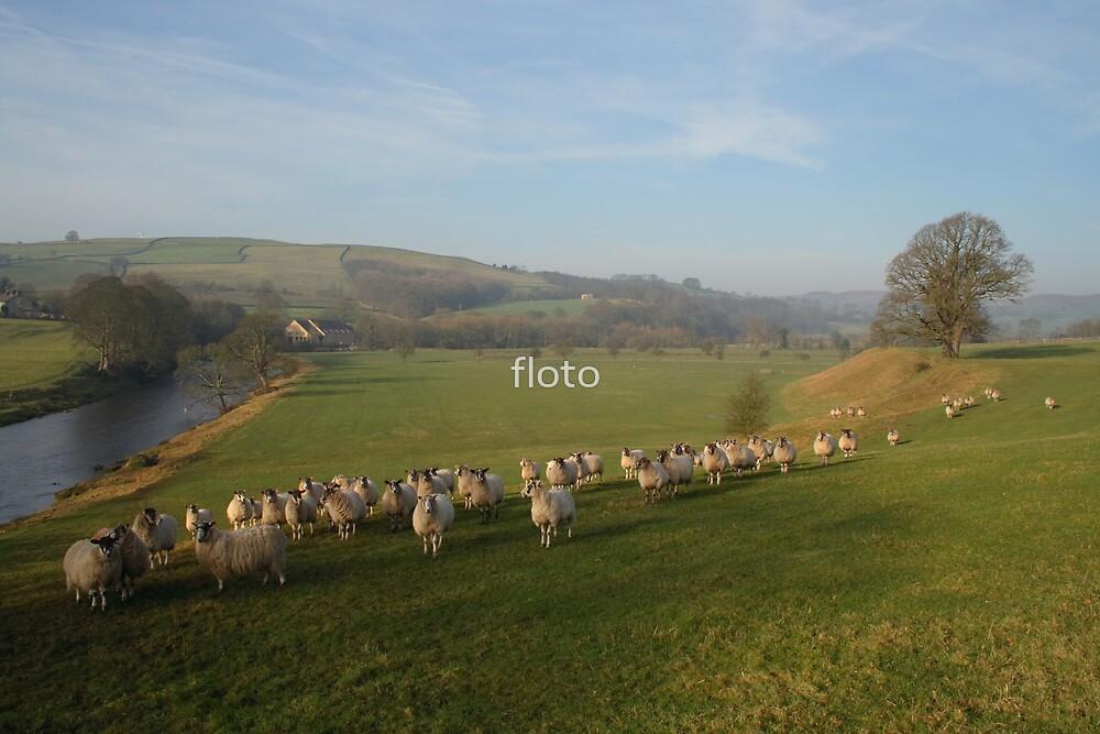 Flocking Sheep by floto