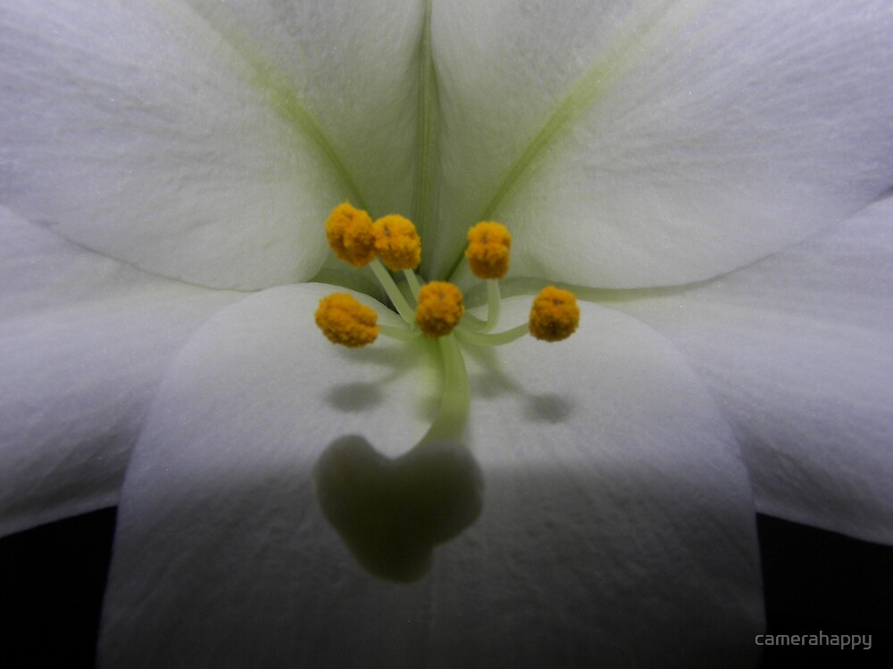 Heart of the Lily by camerahappy