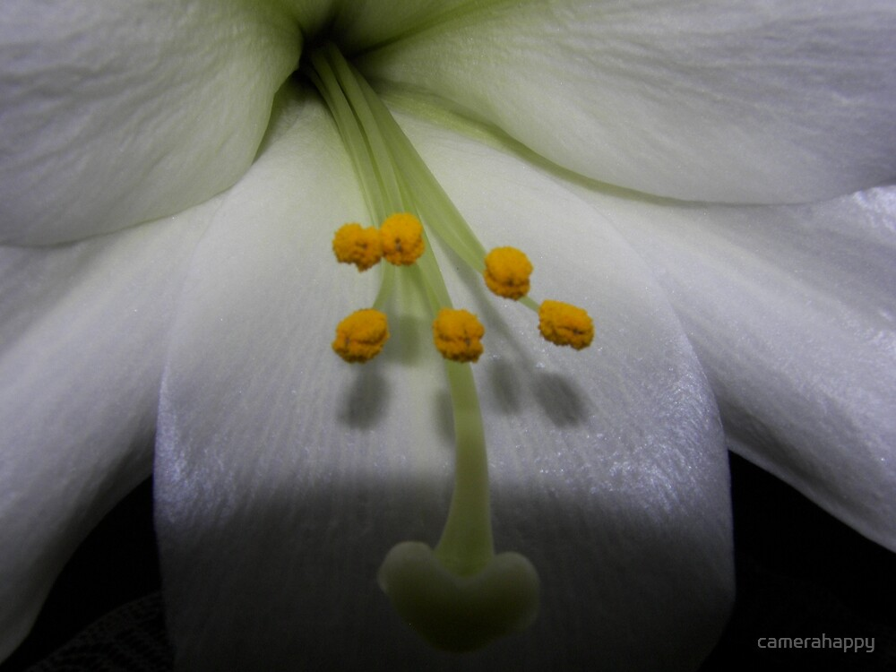 Heart of the Lily II by camerahappy