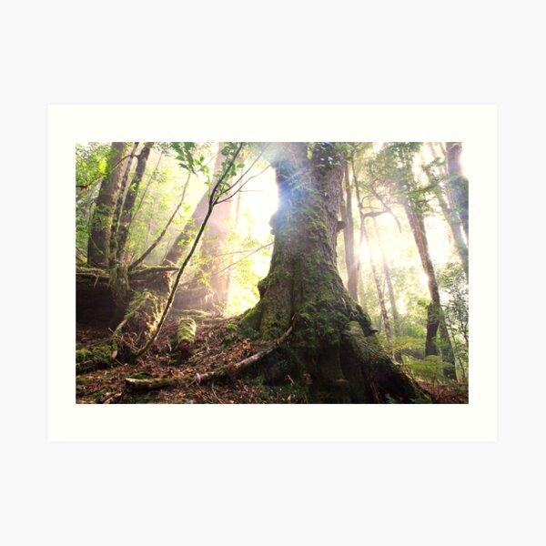 Enchanted Forest, Franklin-Gordon Wild Rivers National Park, Tasmania  Art Print