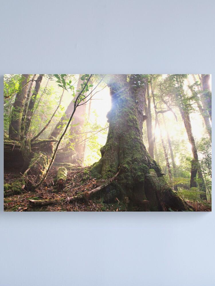 Alternate view of Enchanted Forest, Franklin-Gordon Wild Rivers National Park, Tasmania  Canvas Print