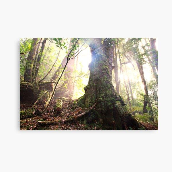 Enchanted Forest, Franklin-Gordon Wild Rivers National Park, Tasmania  Canvas Print