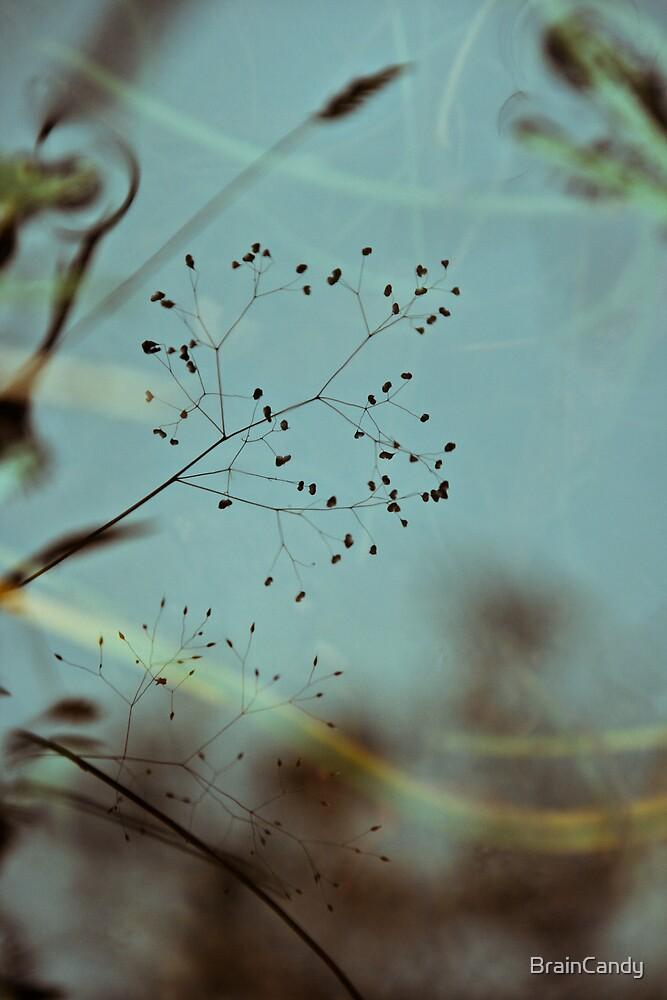 reflect by BrainCandy
