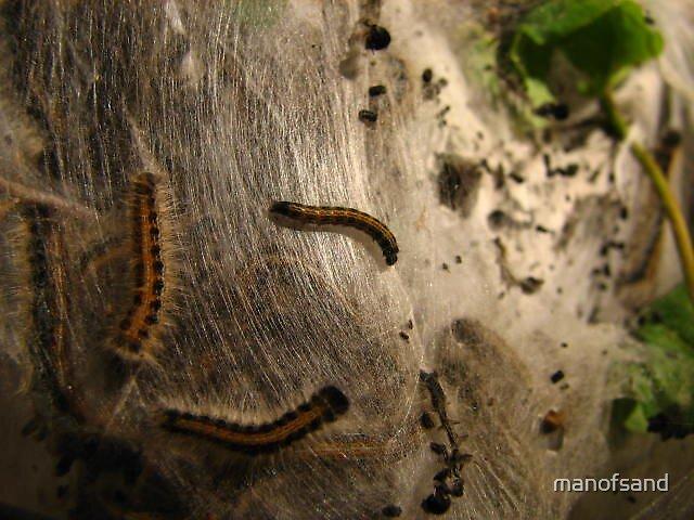 Caterpillar haven by manofsand