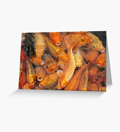 Fish soup Greeting Card