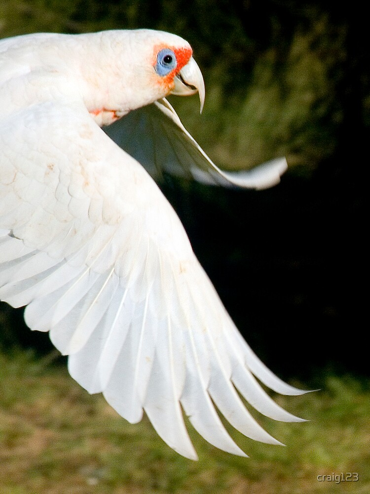 go go birdy! by craig123