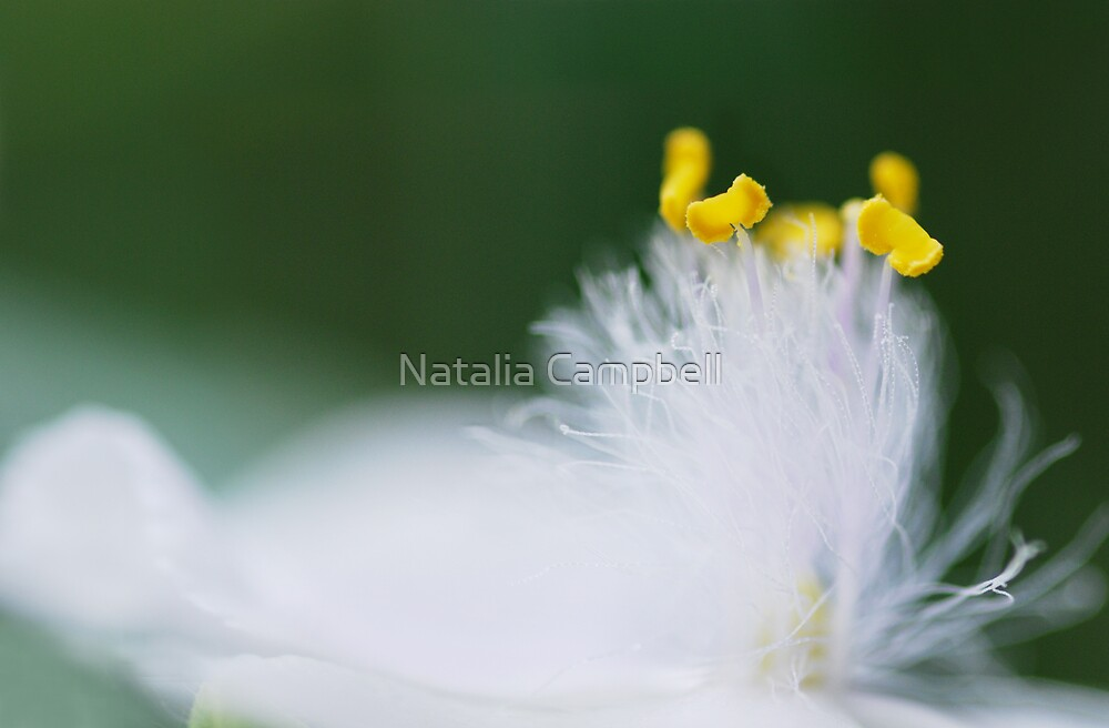 swaying gently... by Natalia Campbell