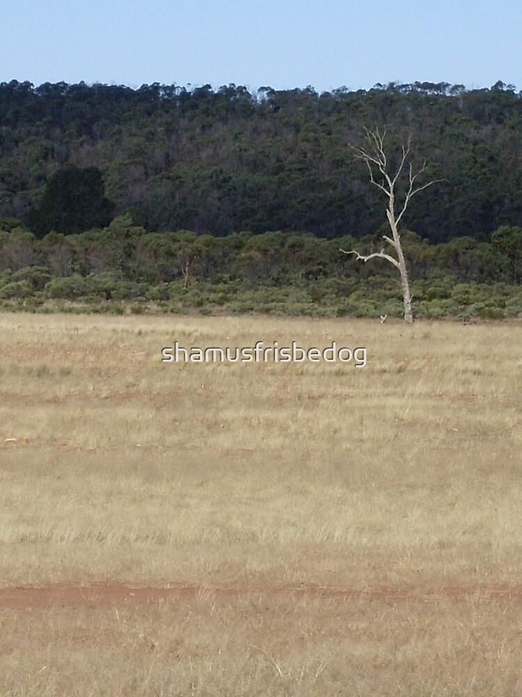 lonely landscape by shamusfrisbedog