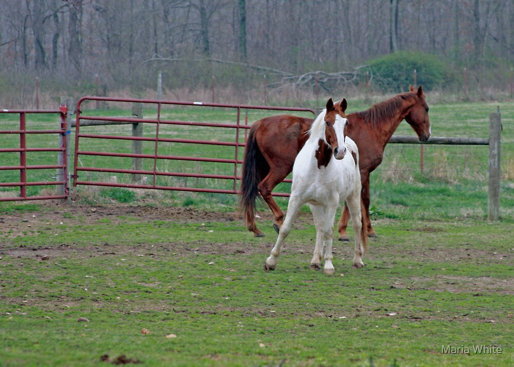 Horses Playing by Maria White