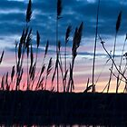 Connecticut Salt Marsh Sunset I by Marianne Campolongo