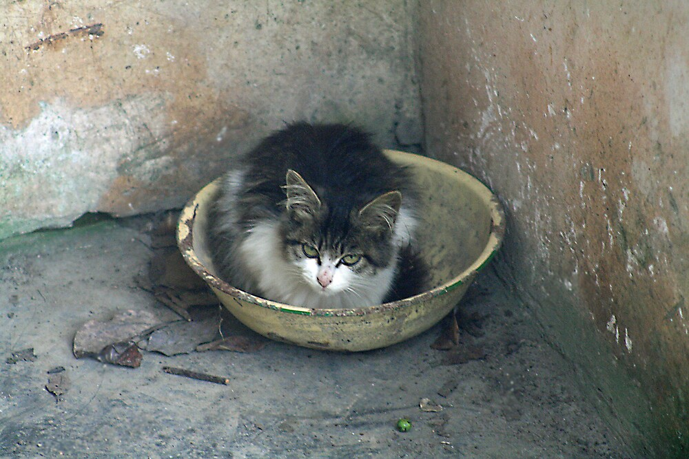 cat in basket by tmeaddows