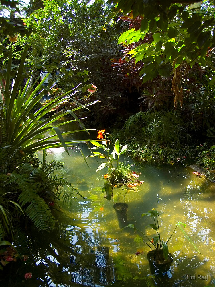Tropical Pond by Tim Ray
